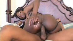 Curvy ebony girl Kelly Star sucks and fucks a big black rod on the bed